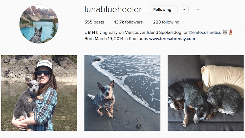 dogs of instagram canadian outdoor instagrammers
