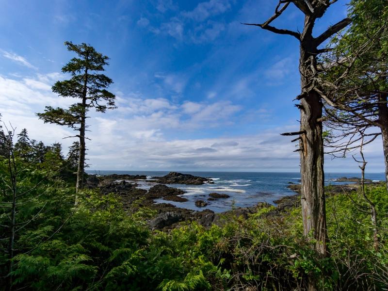Ancient Cedar Loop Trail, Vancouver Island, Tofino Road trip