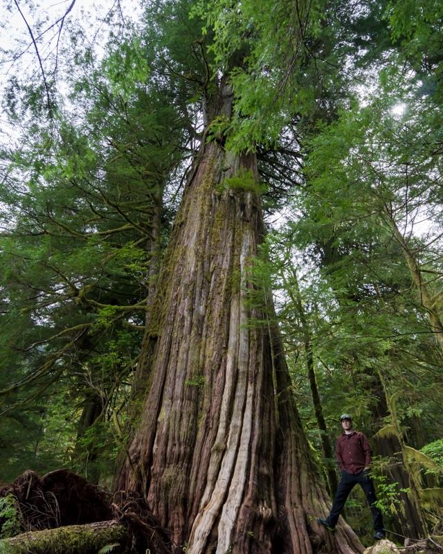 Vancouver Island, Giant Cedar Trail, Tofino Road trip