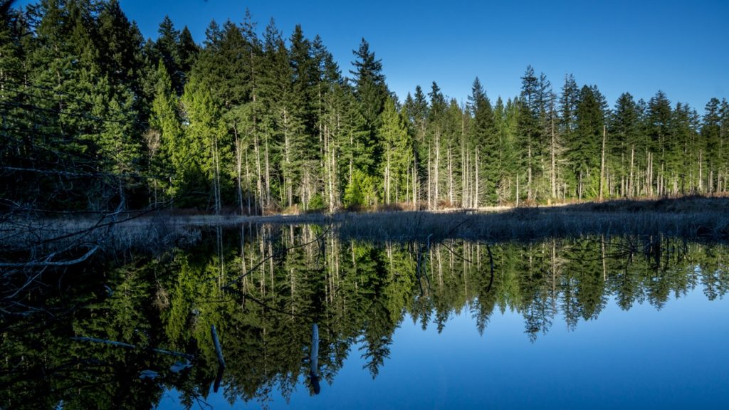 Popular Hiking Trails in Chemainus Chemainus Lake