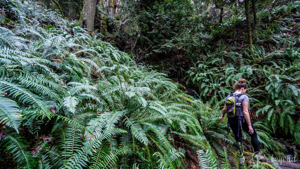 Long Weekend Adventure Ideas in the Cowichan Valley Hiking Maple Mountain