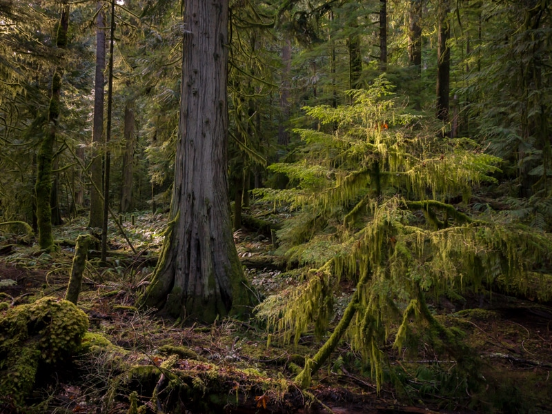 Cathedral Grove, Vancouver Island, Tofino Road Trip