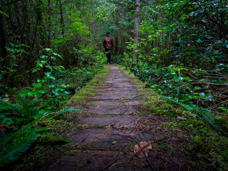 Walk In The Forest Trail, Vancouver Island, Tofino Road Trip