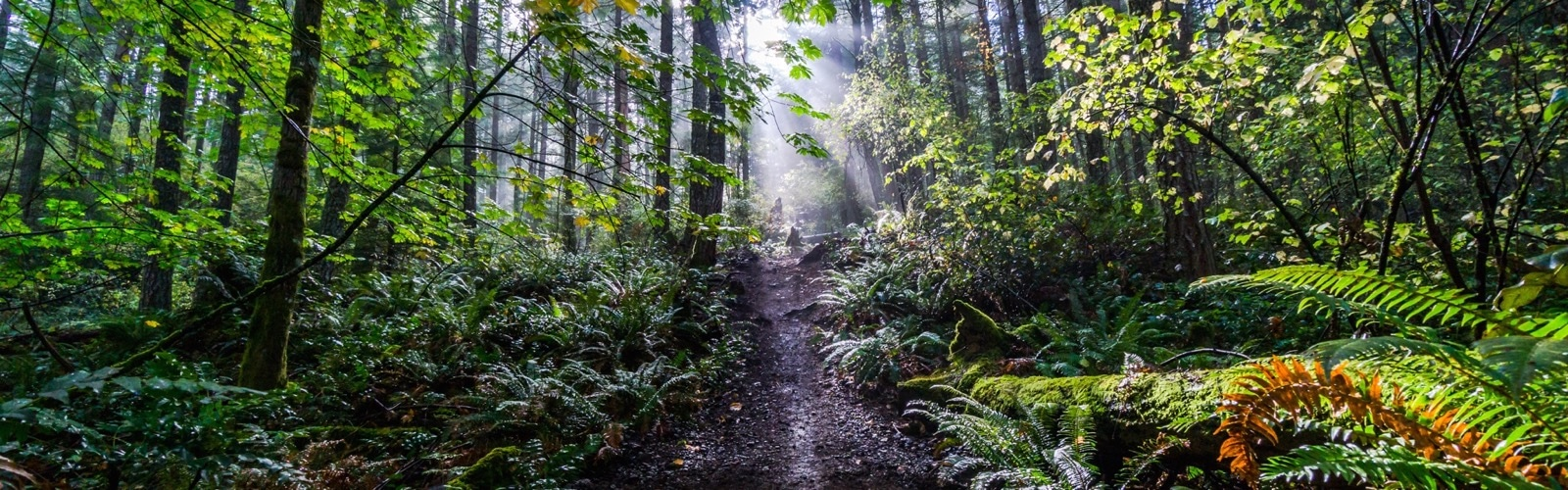 The Future of The Cowichan Valley Municipal Forests