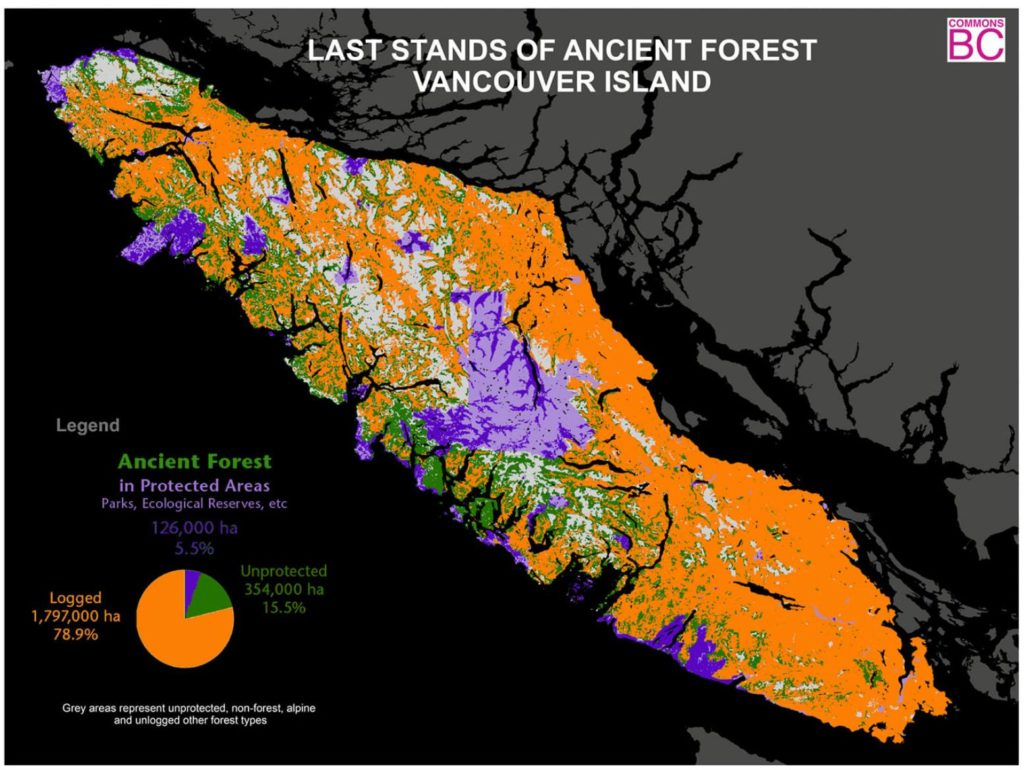 Ancient Old Growth Forests of Vancouver Island