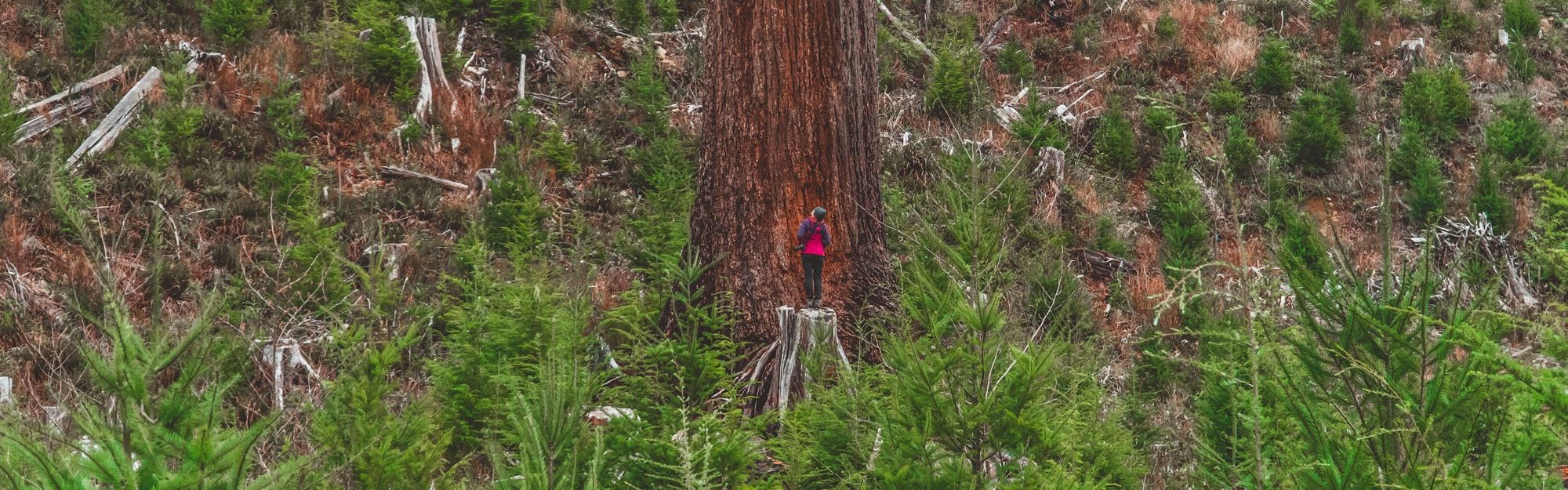 Ancient Old Growth Forests of Port Renfrew