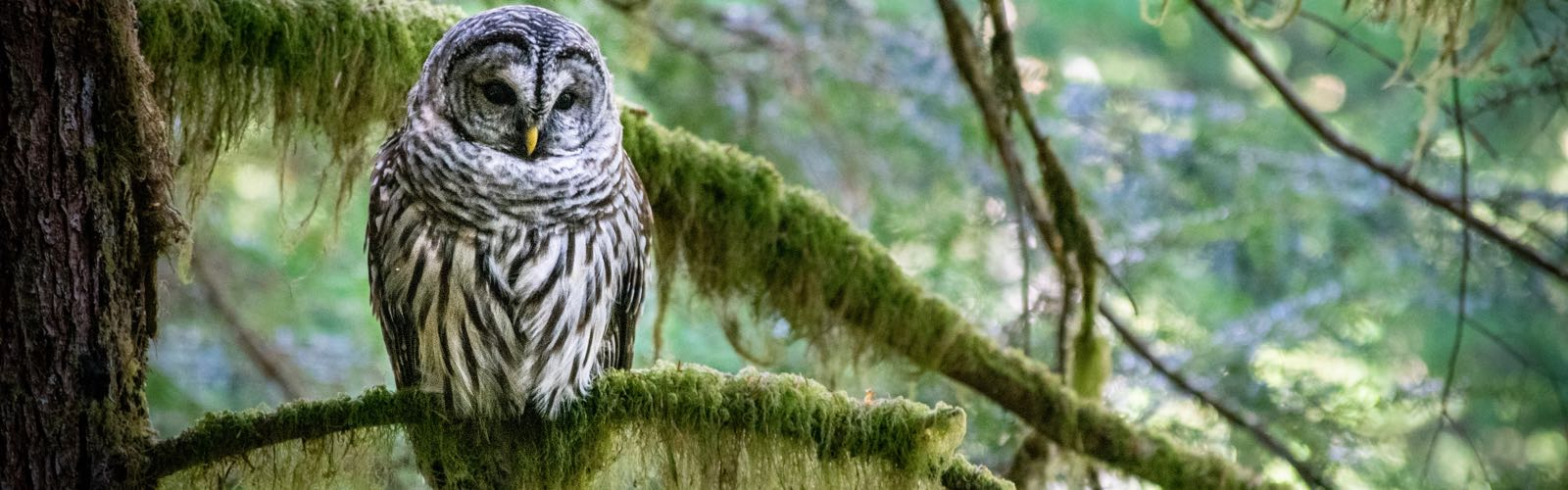 Sooke Hills Hiking – Turning The Ordinary Into Adventure